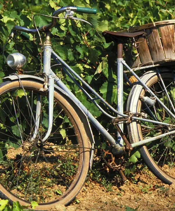 Estate E-bike tour & Tasting